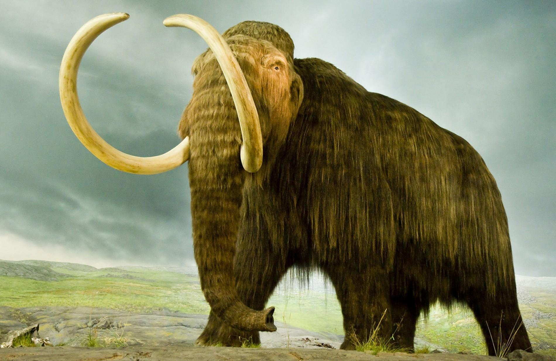 The Hairy Science of Cloning a Mammoth